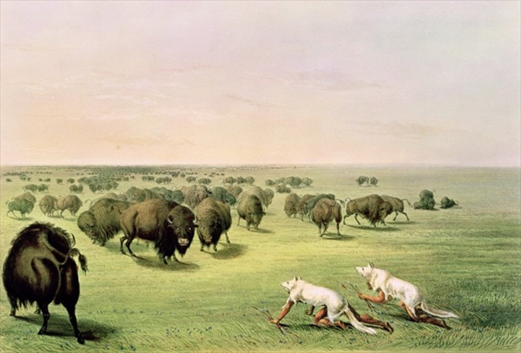 Detail of Hunting Buffalo Camouflaged with Wolf Skins by George Catlin