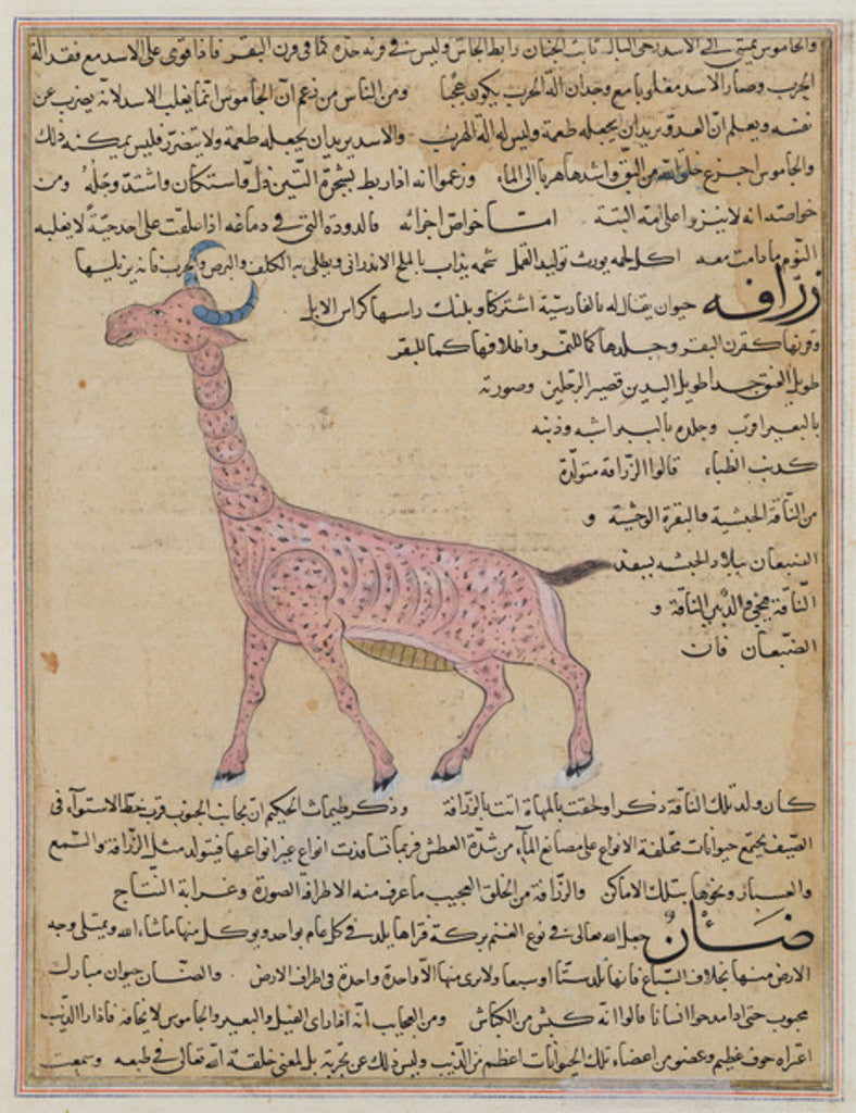 Detail of A Giraffe by Islamic School
