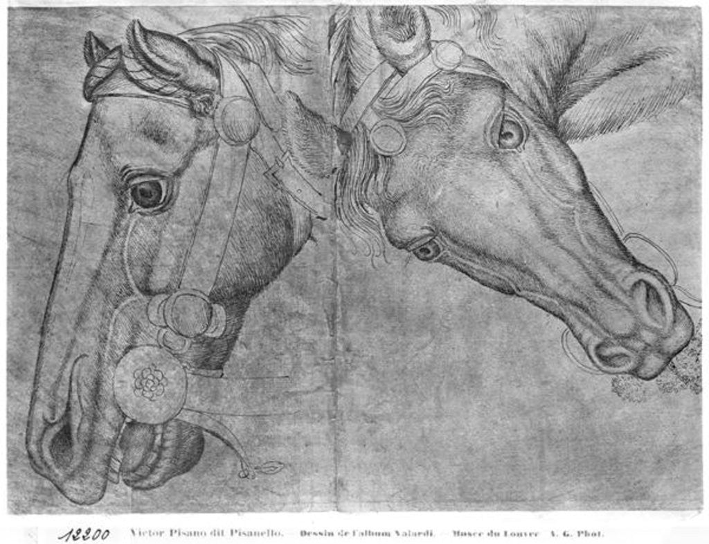 Detail of Heads of horses by Antonio Pisanello