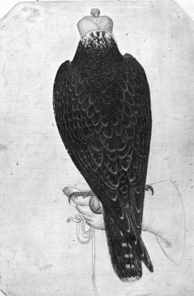 Detail of Hawk on hand, seen from behind by Antonio Pisanello