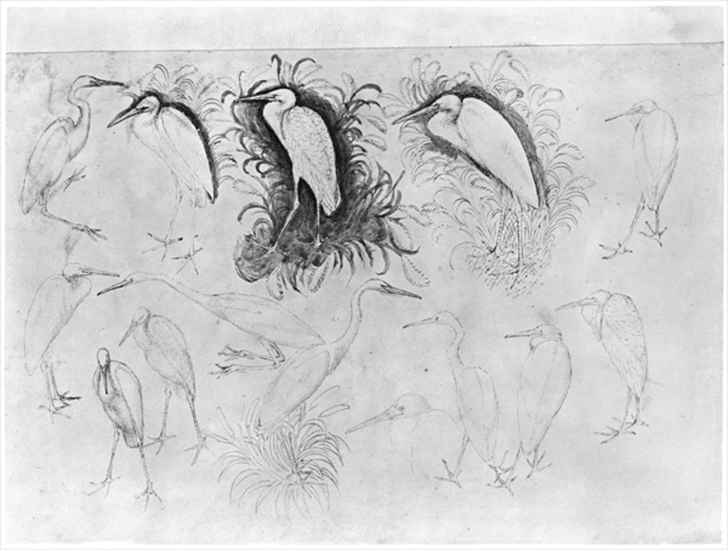 Detail of Fourteen egrets by Antonio Pisanello