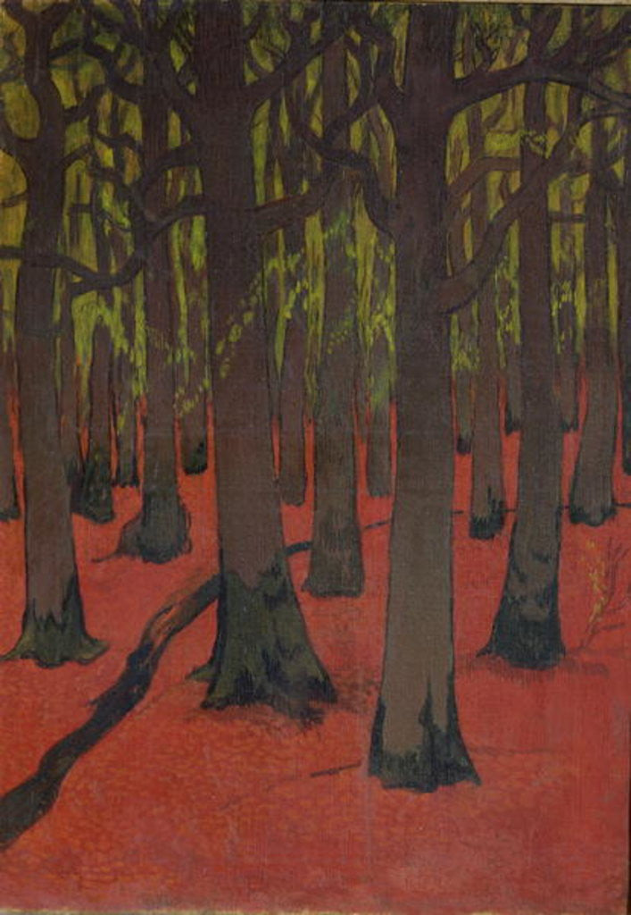 The Forest with Red Earth