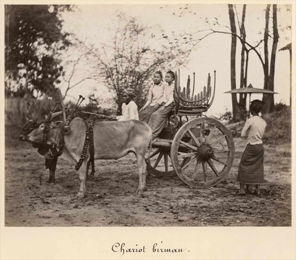 Detail of Cart pulled by two oxen at Mandalay, Burma by English Photographer