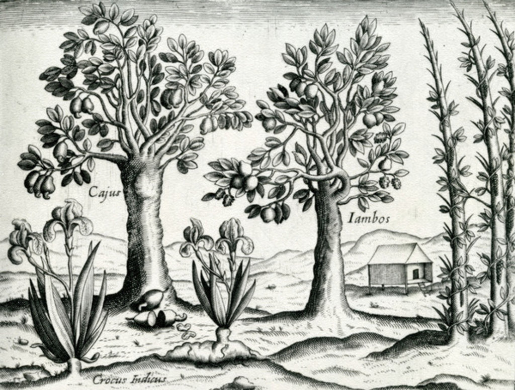 Detail of Landscape, Illustration from 'India Orientalis' by Theodore de Bry