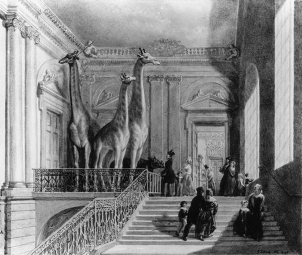 Detail of Giraffes on the staircase in the British Museum by George the Elder Scharf