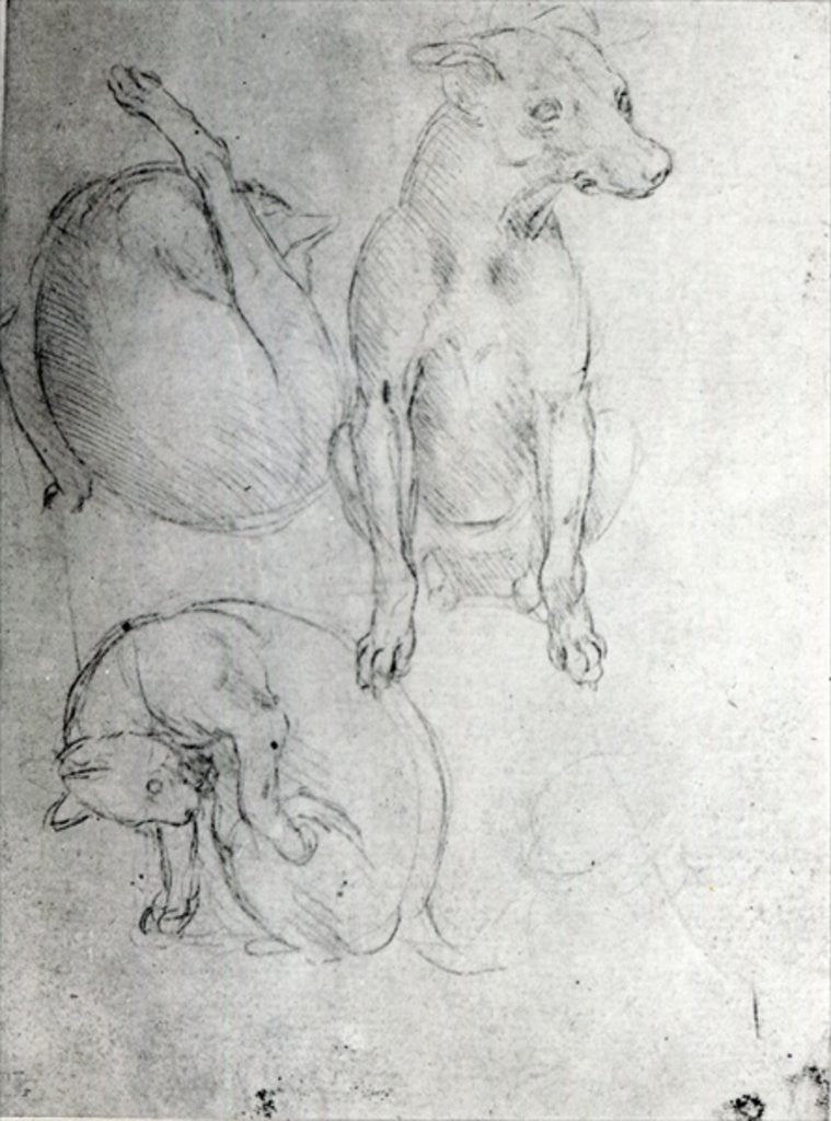 Detail of Study of a dog and a cat by Leonardo da Vinci