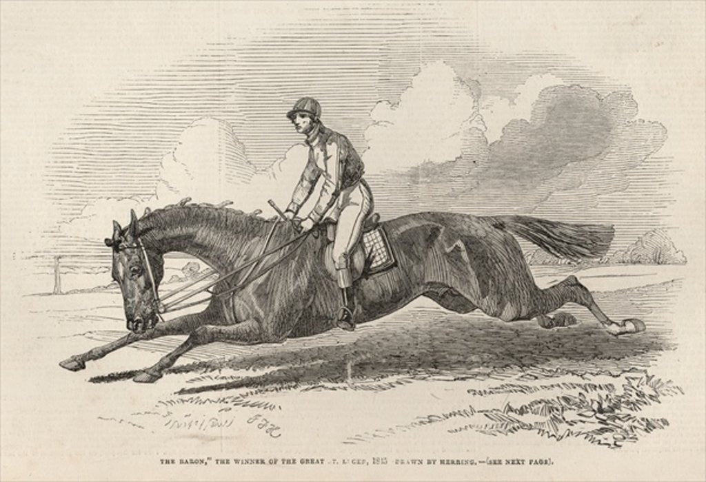 Detail of 'The Baron', the winner of the Great St. Leger by John Frederick Herring Snr