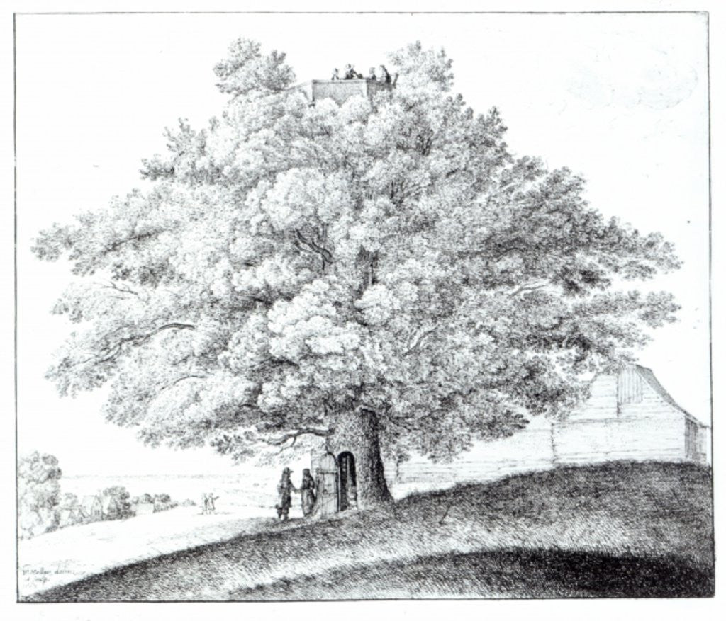 Detail of Hollow Tree at Hampstead by Wenceslaus Hollar