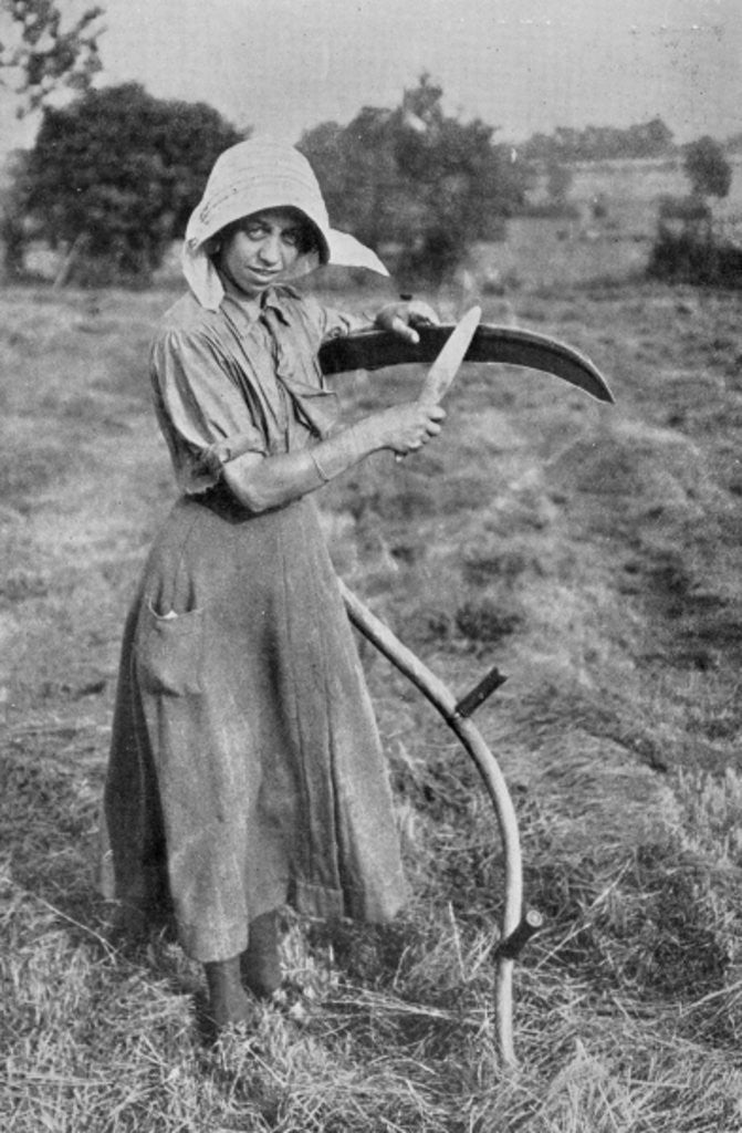 Detail of Harvesting - Member of the Leicester Women's Volunteer Reserve helping a farmer, War Office photographs by English Photographer