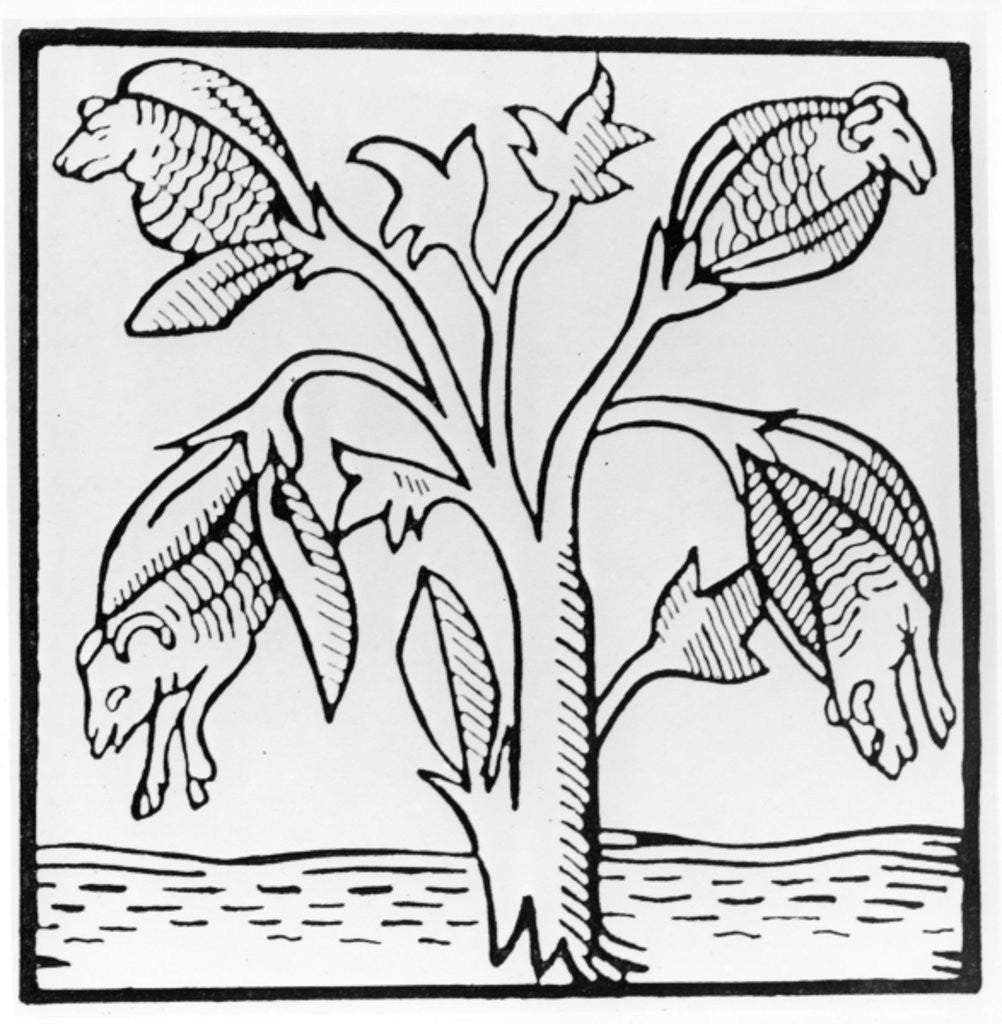 Detail of Cotton plant, as imagined by John Mandeville by English School
