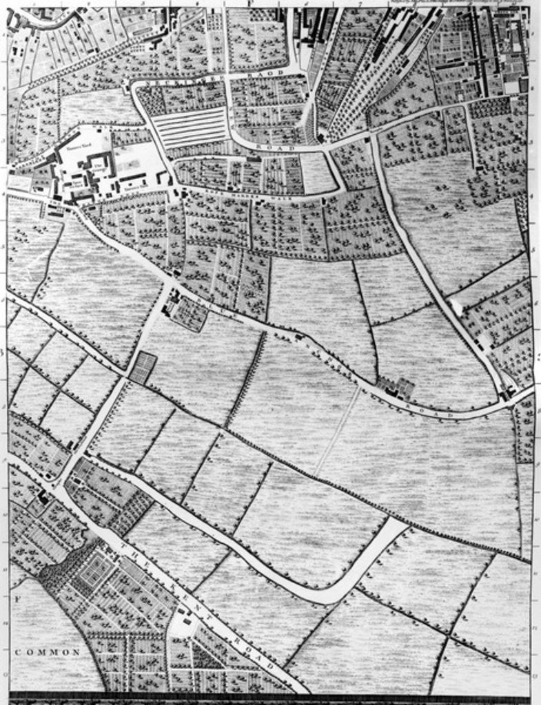 Detail of A Map of Bermondsey, London by John Rocque