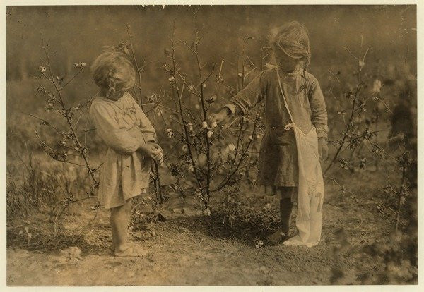 Detail of Millie, aged 4 picks 8 pounds of cotton a day and Nellie 5, picks 30 on a farm near Houston by Lewis Wickes Hine
