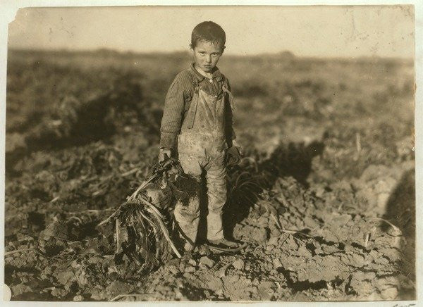 Detail of 6 year old Jo pulling sugar beets on a farm near Sterling, Colorado by Lewis Wickes Hine