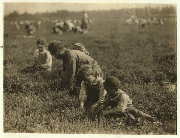 Detail of Jo Arnao 3, picking cranberries with his brother 6 and sister 9 at Whites Bog, Browns Mills, New Jersey by Lewis Wickes Hine