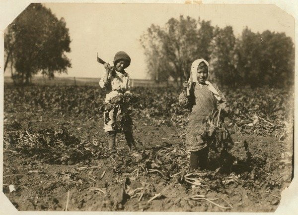 Amelia and Mary Luft, 9 and 12, cutting sugar beet on farm near Sterling, Colorado by Lewis Wickes Hine