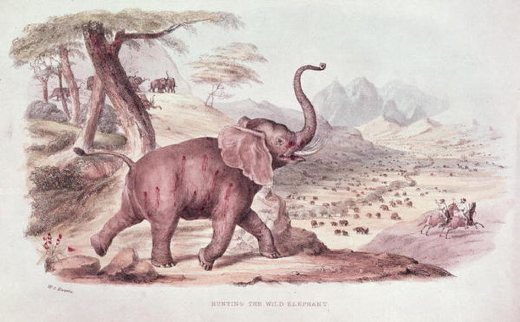 Detail of Hunting the Wild Elephant, illustration from 'Wild Sports of South Africa' by W.C. Harris by William Cornwallis Harris