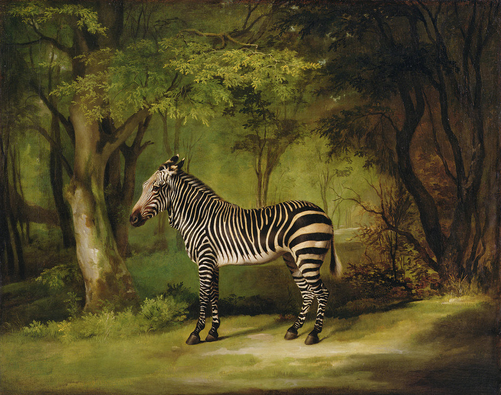 Detail of A Zebra by George Stubbs