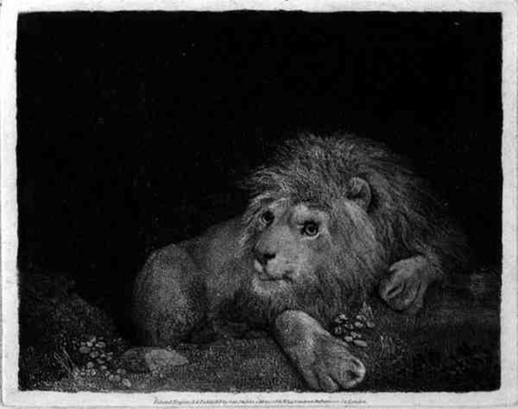 Detail of A Lion (A Recumbent Lion) by George Stubbs