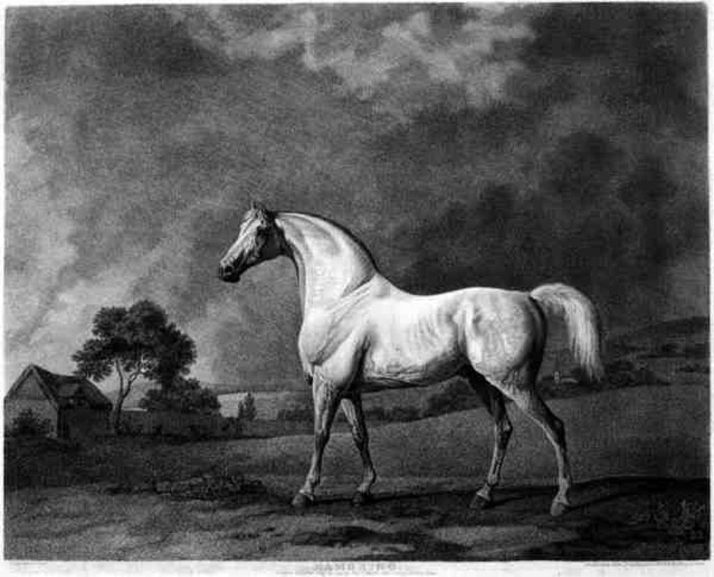 Detail of Mambrino, engraved by George Townley Stubbs by George Stubbs
