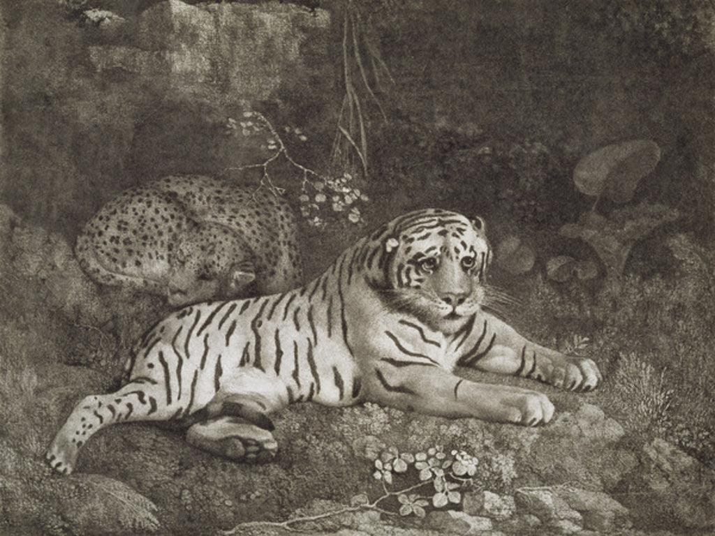 Detail of Two Tygers by George Stubbs