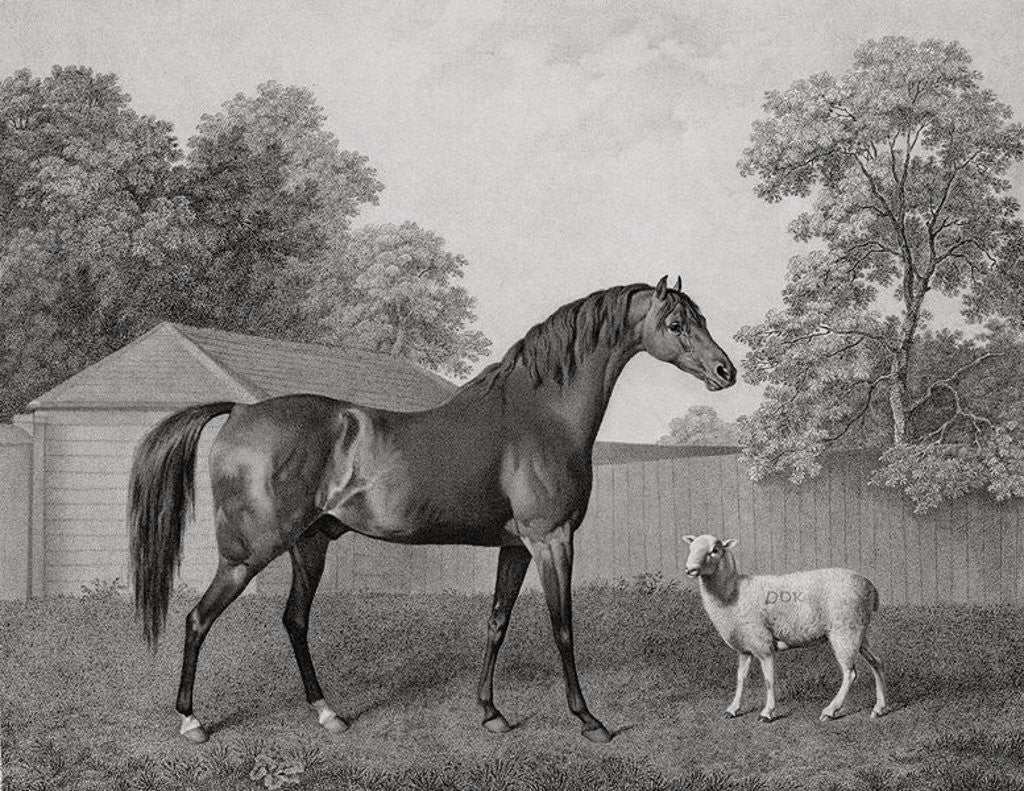 Detail of Dungannon by George Stubbs