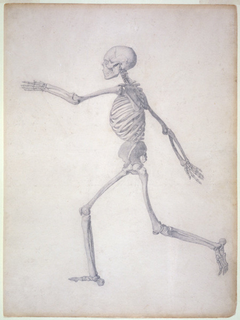 Detail of The Human Skeleton, lateral view by George Stubbs