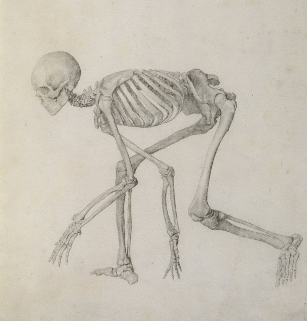 Detail of Human Skeleton: Lateral view in Crouching Posture by George Stubbs