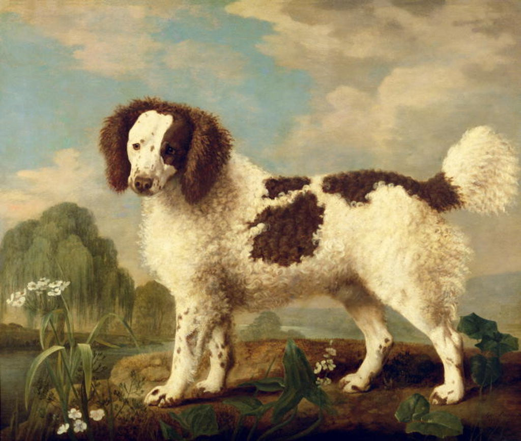 Detail of Brown and White Norfolk or Water Spaniel by George Stubbs