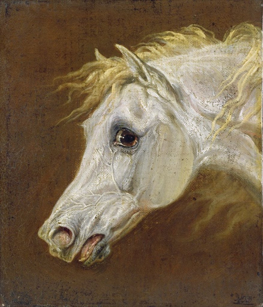 Detail of Head of a Grey Arabian Horse by Martin Theodore Ward