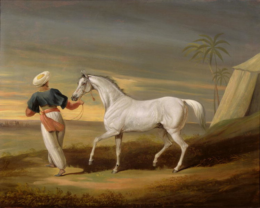 Detail of Signal, a grey Arab, with a Groom in the Desert by David of York Dalby