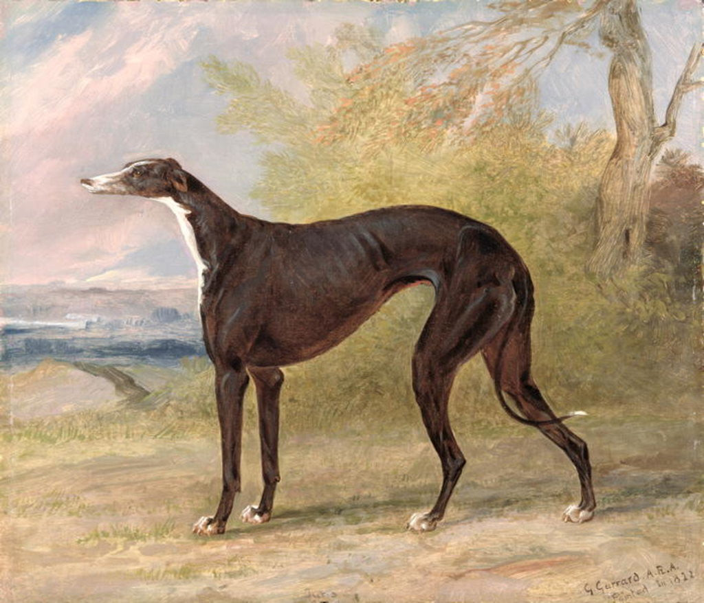 Detail of One of George Lane Fox's Winning Greyhounds: the Black and White Greyhound Bitch, Juno, also known as Elizabeth by George Garrard