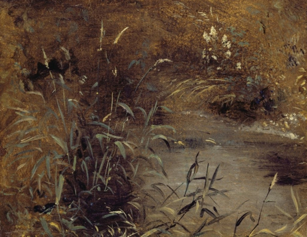 Detail of Rushes by a Pool by John Constable