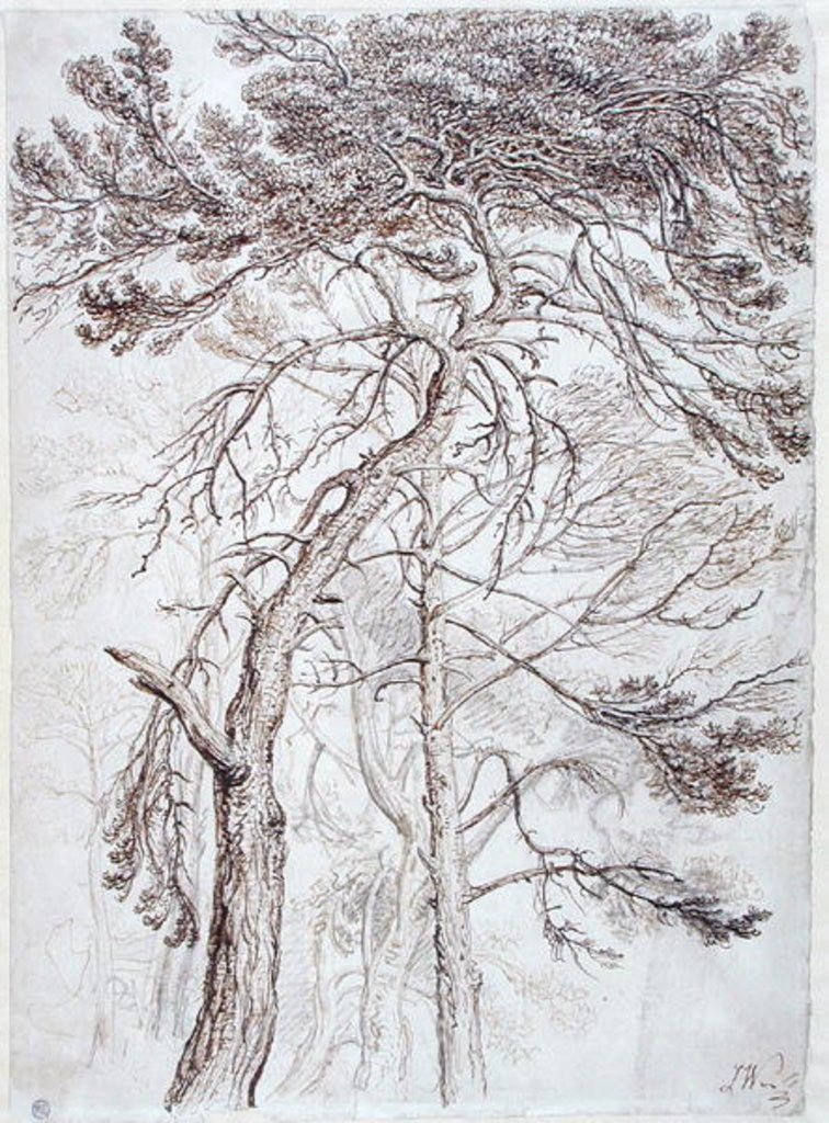 Detail of Study of Trees by James Ward