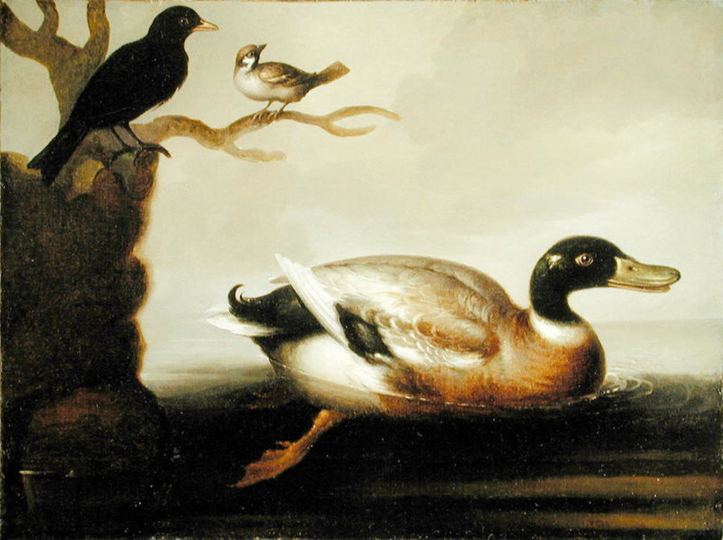 Detail of Mallard Duck and Other Birds by English School