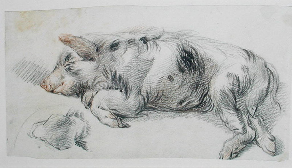 Detail of Sleeping Pig by James Ward