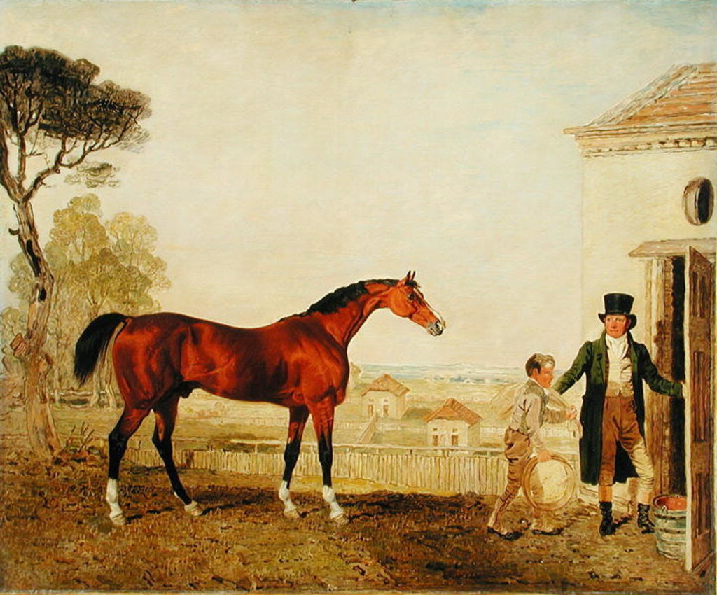 Detail of 'Sultan' at the Marquess of Exeter's Stud, Burghley by Lambert Marshall