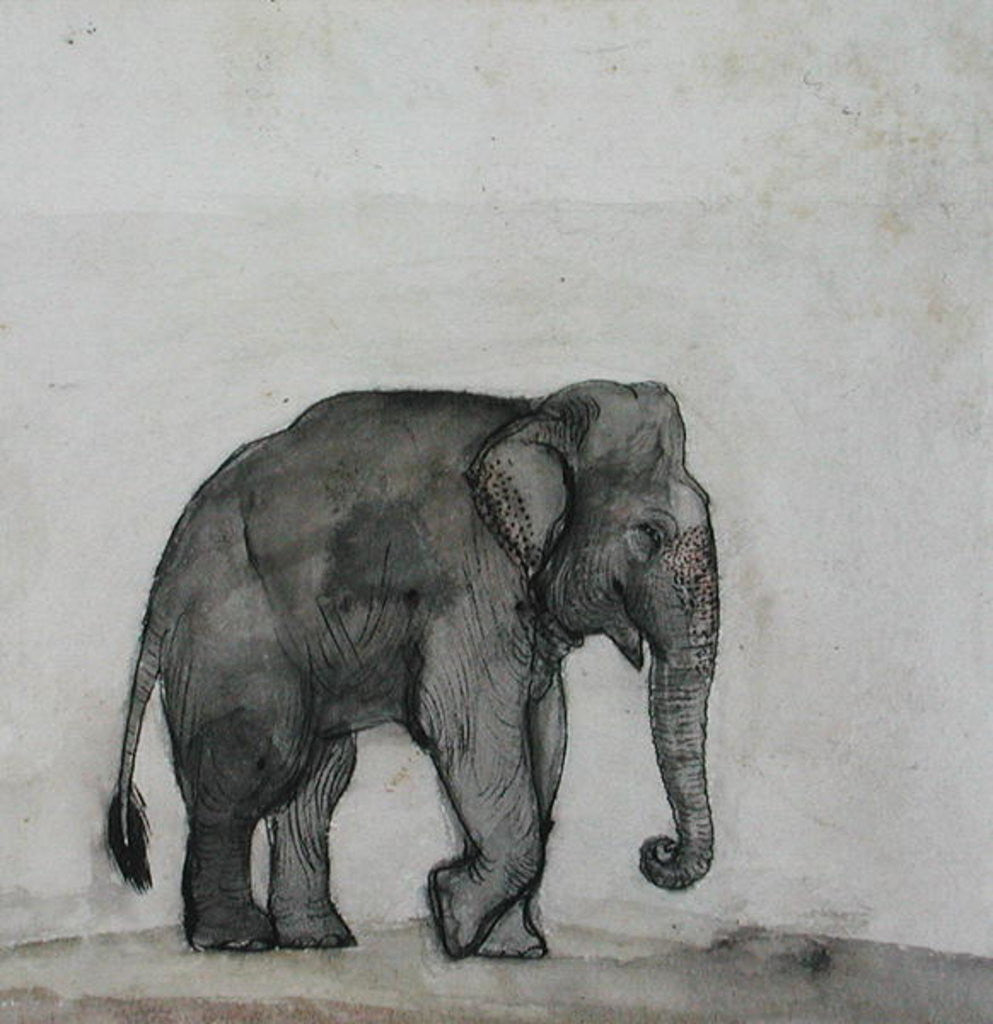 Detail of Elephant by Gungaram Tambat