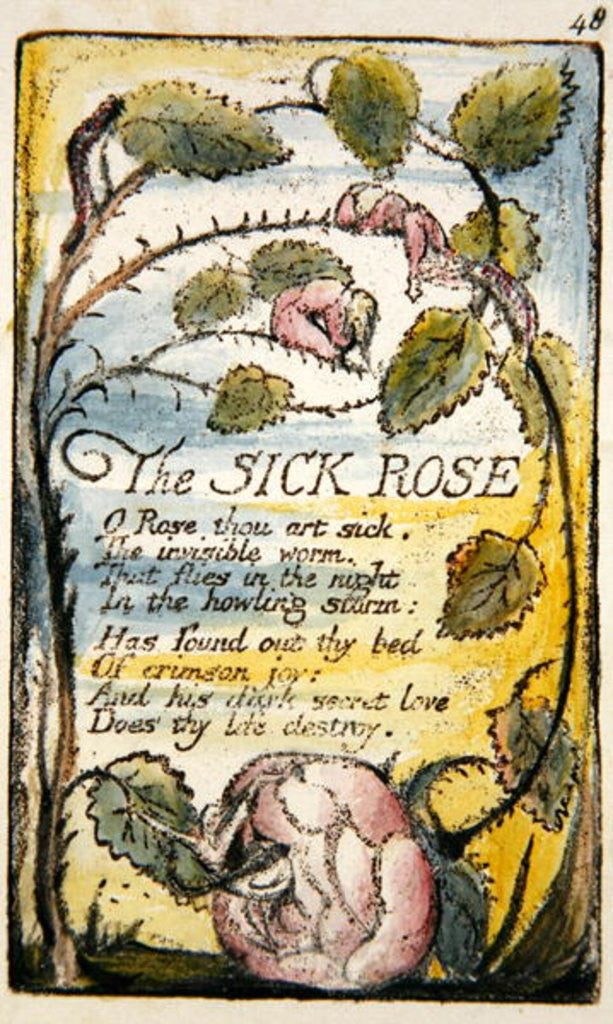 who is the speaker in the sick rose