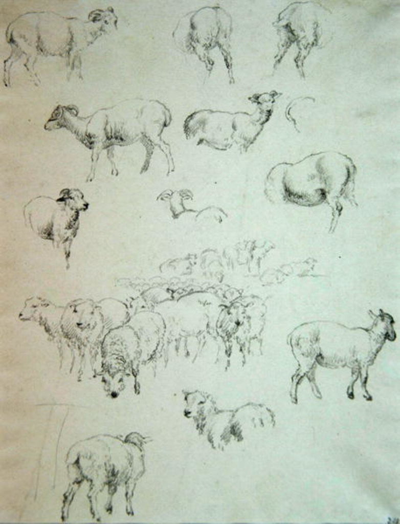 Detail of Flock of Sheep by Robert Hills