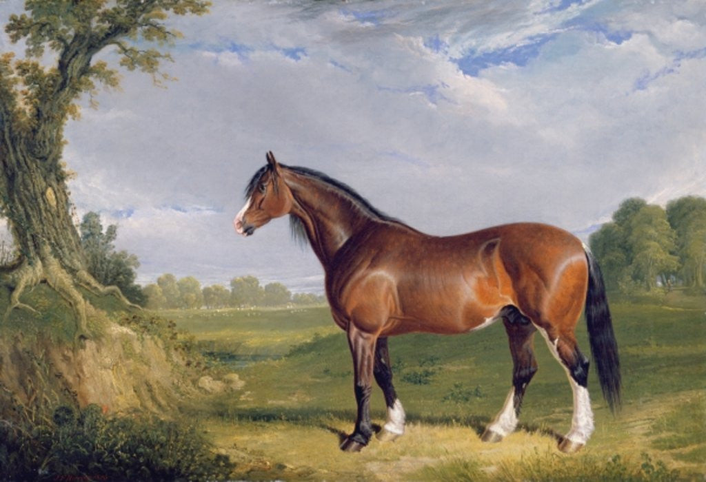 Detail of A Clydesdale Stallion by John Frederick Herring Snr