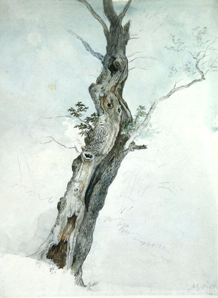 Detail of Tree Study by Robert Hills
