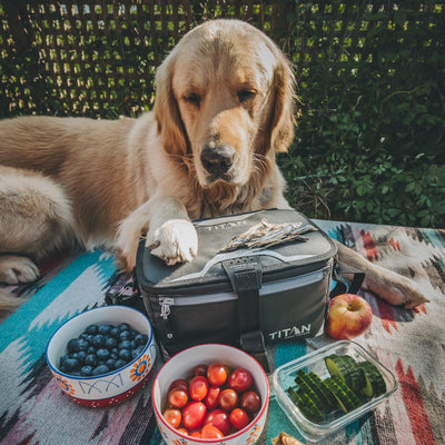 Titan Deep Freeze® Zipperless™ Lunch Box - Black - Lifestyle, dog joining the picnic