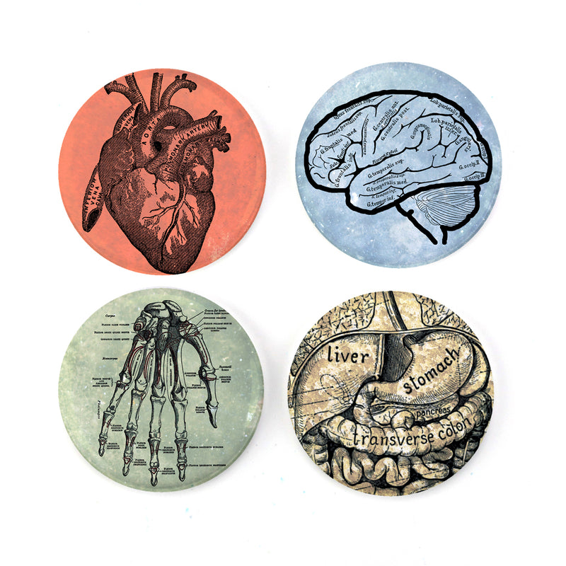 "Buttonsmith® Anatomy 1.25"" Magnet Set - Made in the USA - Buttonsmith Inc."