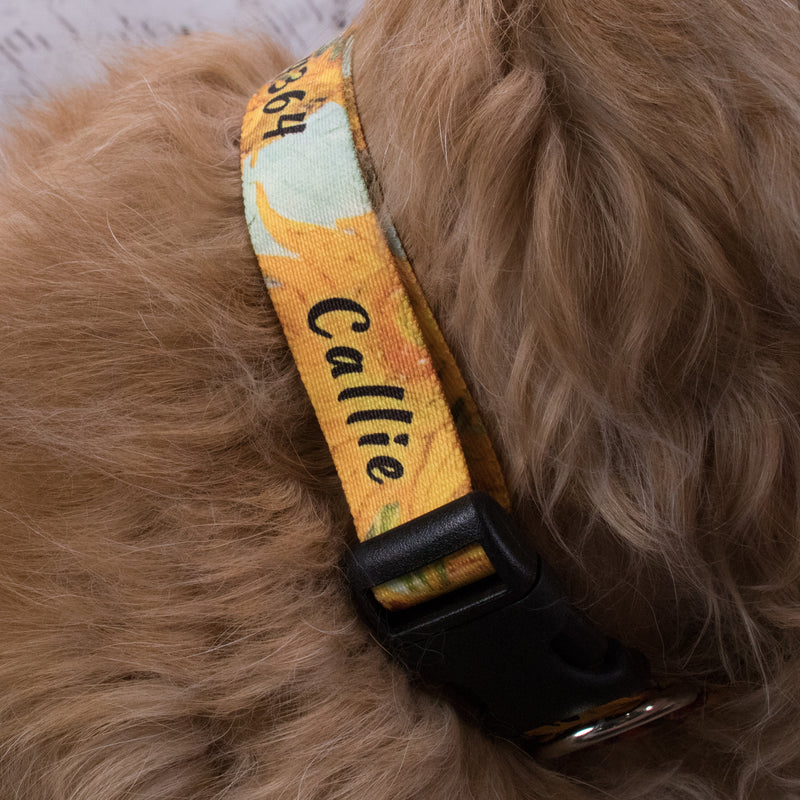 Custom Personalized Dog Collars - Rainbow Designs - Made in USA - Buttonsmith Inc.