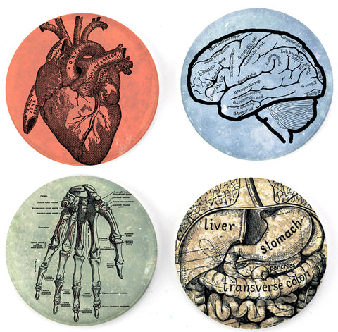 Buttonsmith® Anatomy Tinker Top® Set – Made in USA – for use with Tinker Reel® Badge Reels