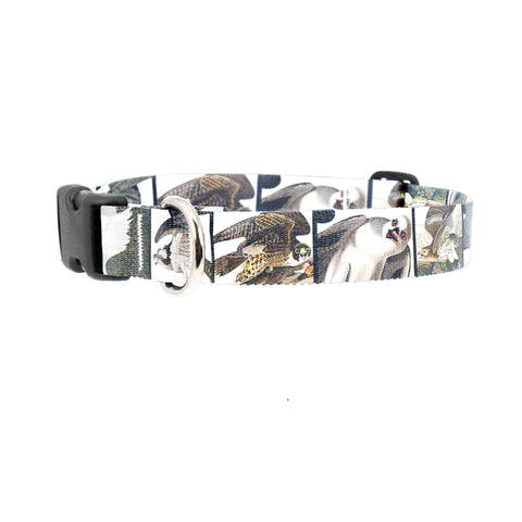 Buttonsmith Audubon Raptors Dog Collar - Made in the USA