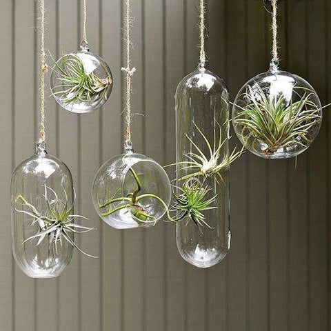 "Hanging Glass Vase 3-4"" Round Planter Bubble Ceiling Ball Terrarium - Richview Glass Wedding Supplies"