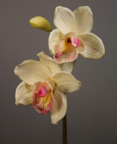 Artificial Flower Cymbidium orchid real touch floramatique SB015-(White) ART1-29 - Richview Glass Wedding Supplies