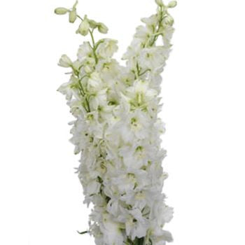 Artificial Silk flower Delphinium (white) DEL1 - Richview Glass Wedding Supplies