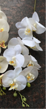 LARGE REAL TOUCH PHALAENOPSIS ORCHID ARTIFICIAL FLOWER WHITE WEDDING FLOWER (white) -REA1